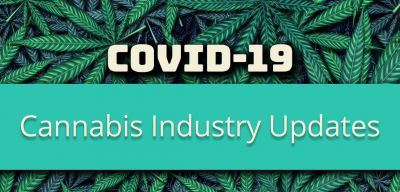 Photo for: Covid-19: Daily updates from the Cannabis Industry