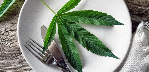 Photo for: Cannabis, edibles and restaurants: what can you legally find on the menu?