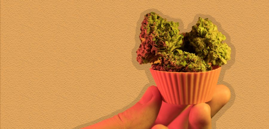 Photo for: Emergence of Cannabis Edibles in the US Market